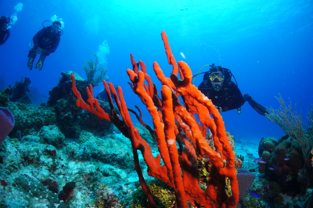 Buceo en corales