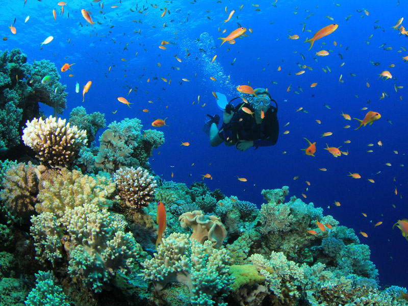 Buceo ecologico
