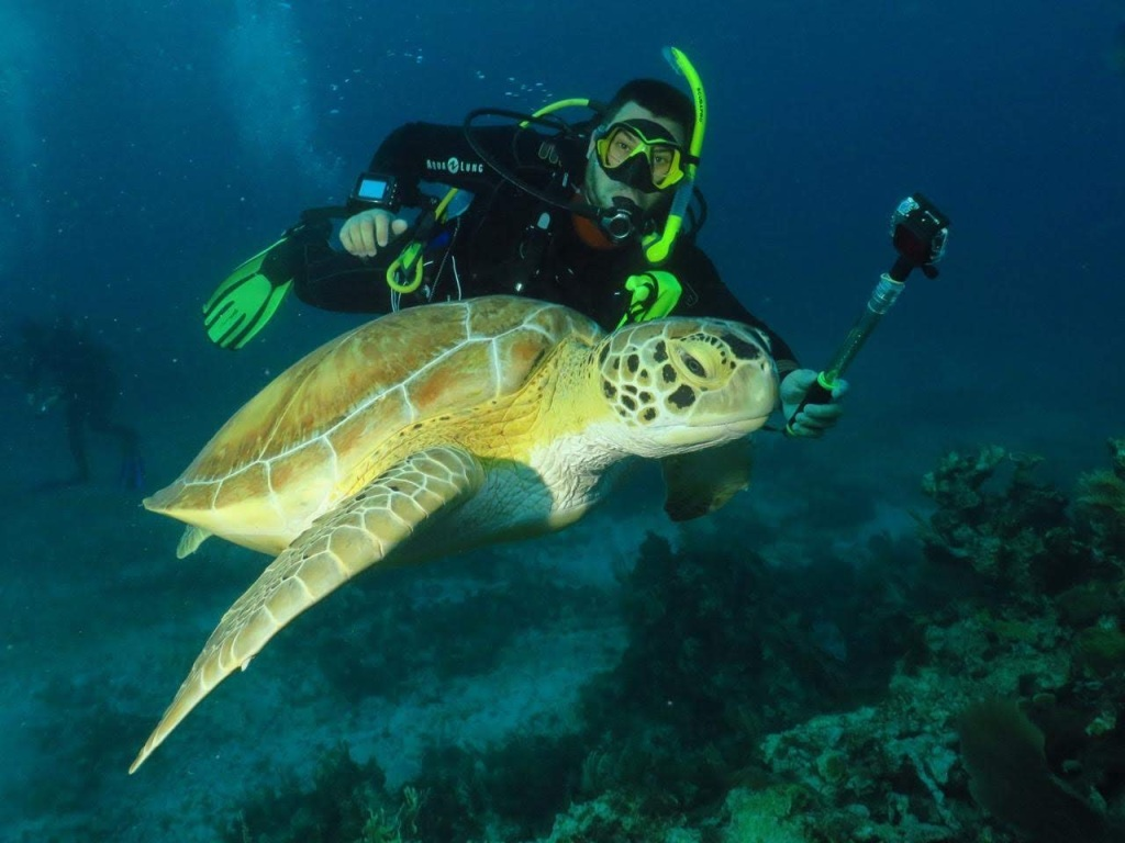 Avistar fauna marina