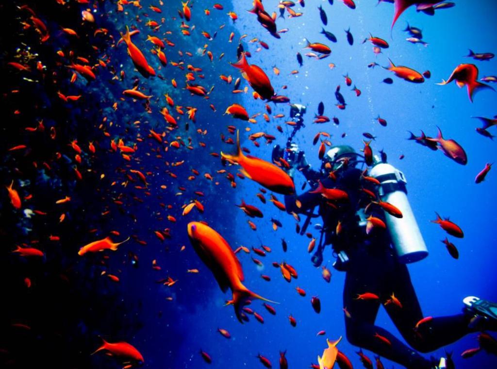 Consejos para cuidar los océanos