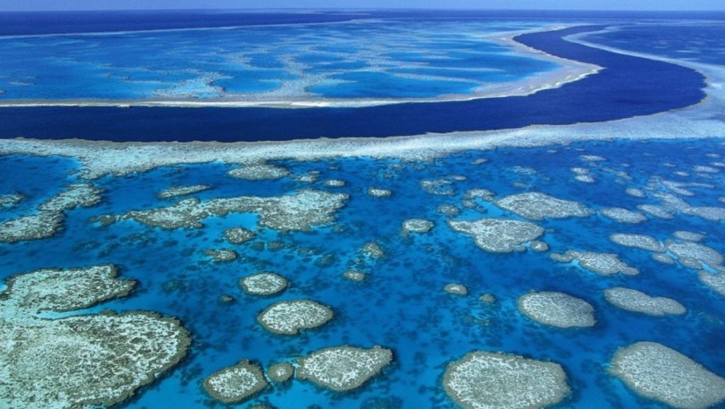 Bucear en arrecifes de corales