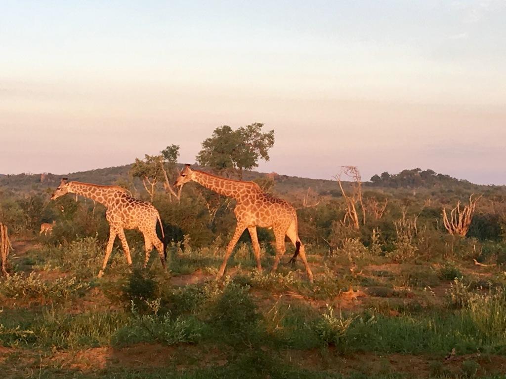 Bucear en sudafrica
