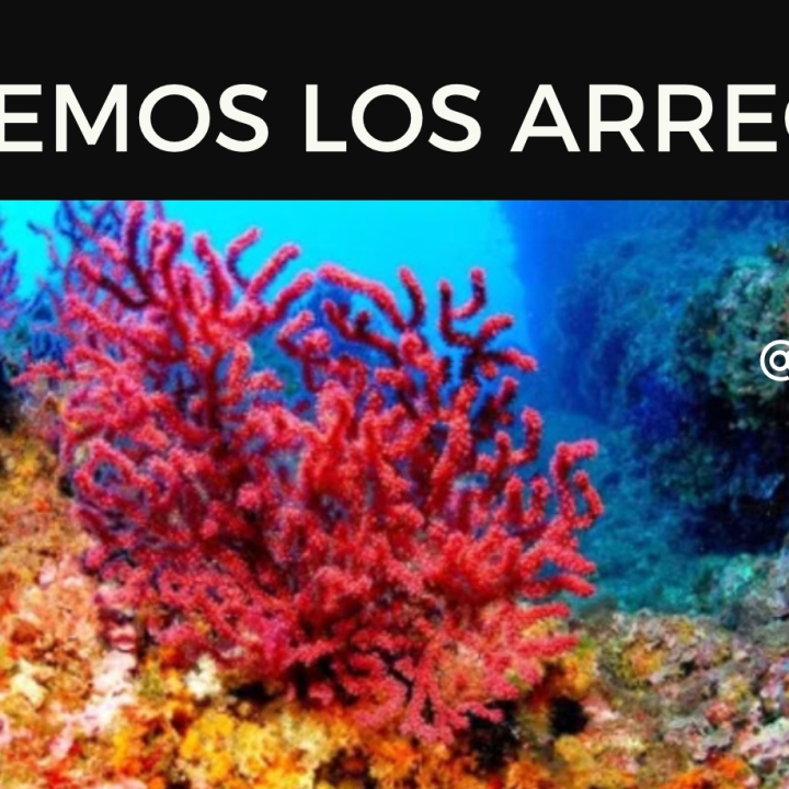 Bucear en arrecifes de coral