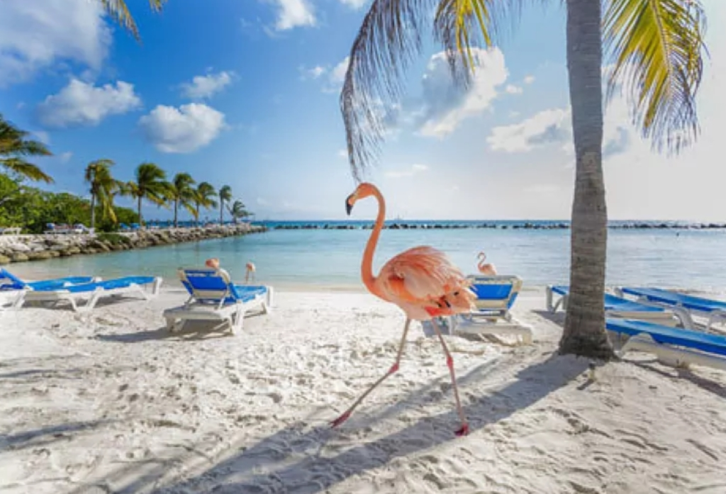 Mi primer viaje de buceo Aruba