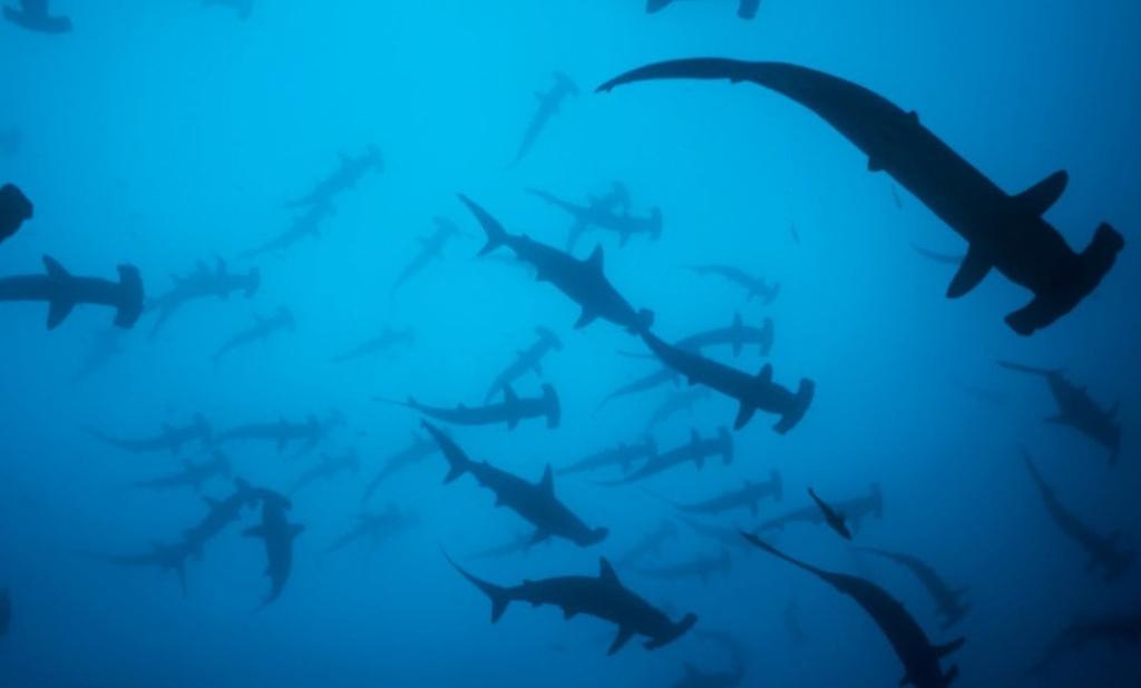 Consejos para cuidar los oceanos